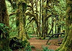Natural Wonders of Washington | Rainforest, Coast & Volcanoes