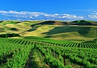 Washington Wine Country | Yakima, Columbia & Walla Walla Valleys
