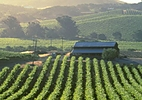 Californian Wine Tasting | Escorted Tour